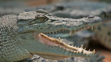 philippine crocodile facts