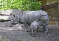 javan rhino facts for kids
