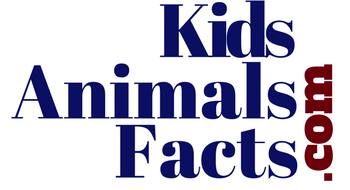 Kids Animals Facts